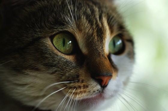 Portrait-of-My-Cat-a29735866
