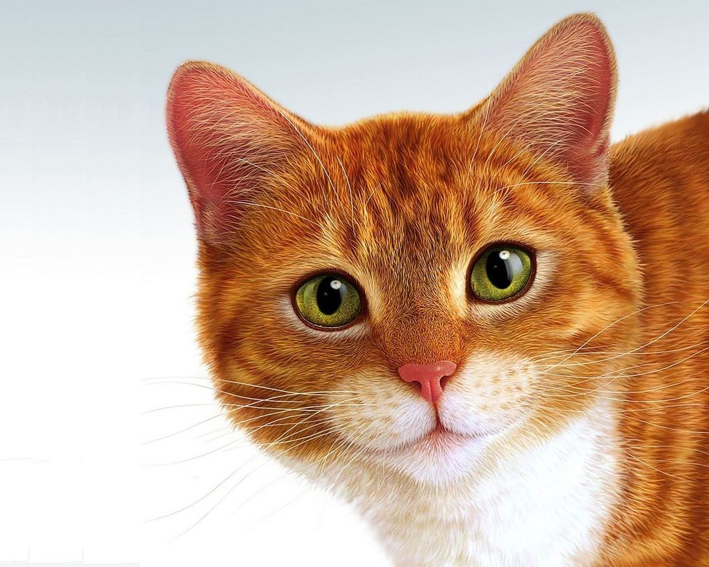 Картинки нарисованные кот и кошка