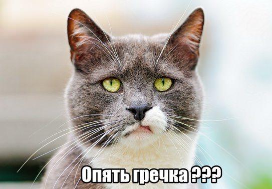 кот с надписью опять гречка