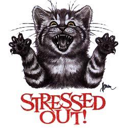 stress koshka