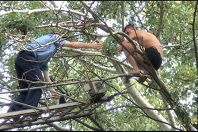 Одессит хотел снять кошку с дерева, но застрял сам