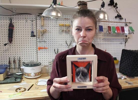 Сердитый кот в кольчуге