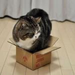 коробка маловата