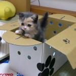 Котенок выглядывает из коробки