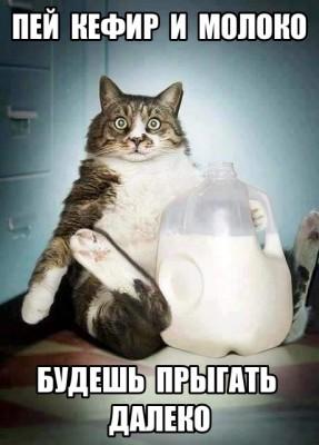 Кот и молоко