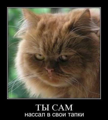 кошачьи эмоции обида стыд