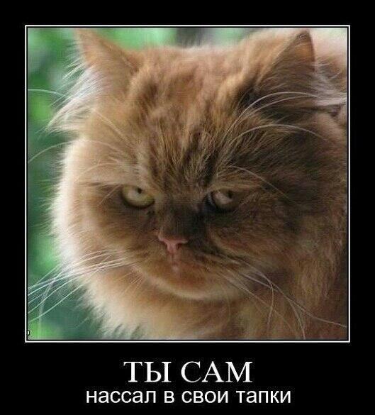 Скачать Приколы про Кошек