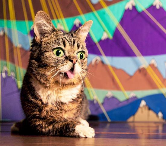 кошка лил баб