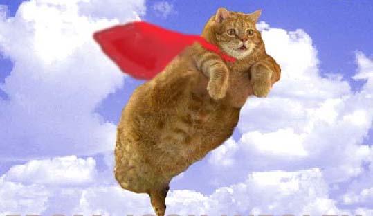 летающий кот супермен