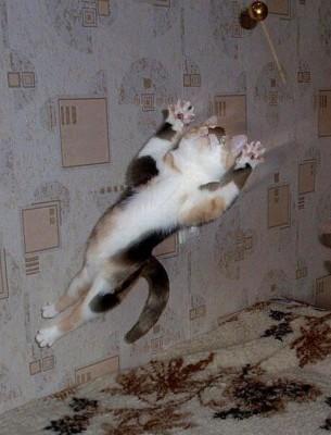 прыжок кота над кроватью