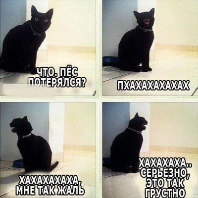 4 картинки кошек