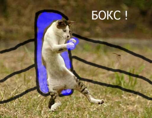 боксирующий кот