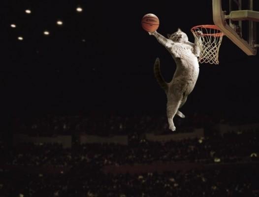 кот баскетбол