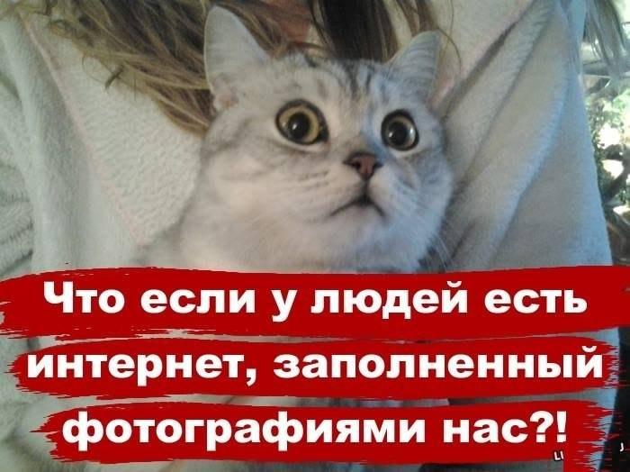 http://funkot.ru/wp-content/uploads/2013/08/cat-esli-internet.jpg