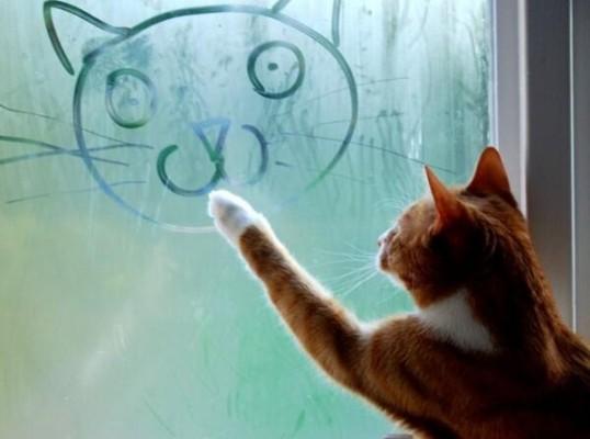 кот рисует на окне