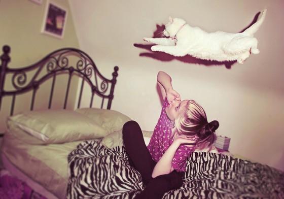 какая кошка тебе нужна
