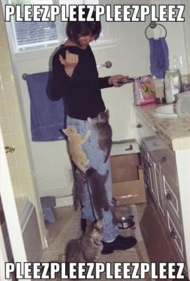 котята облепили женщину