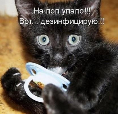 Черный котенок с соской