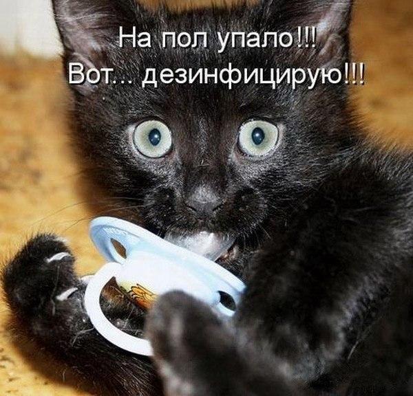 картинки с надписями с котятами