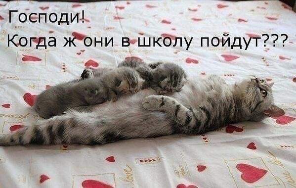 http://funkot.ru/wp-content/uploads/2013/08/funny-v-shkolu.jpg