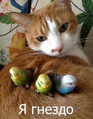 кот гнездо
