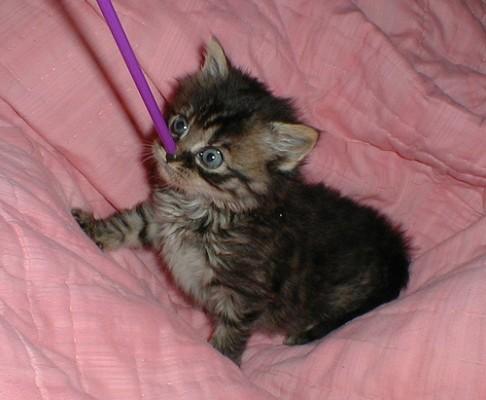 котенок с трубочкой на носу