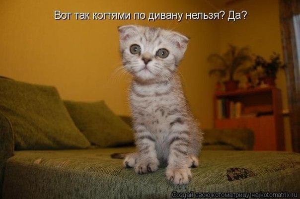 Смешные картинки котят с надписями: funkot.ru/2013/08/kitten-mems