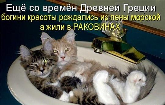 кошки в раковине