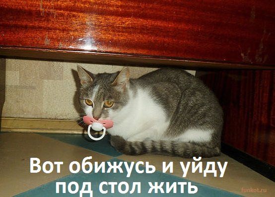 кот с соской