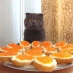 кот с бутрбродами
