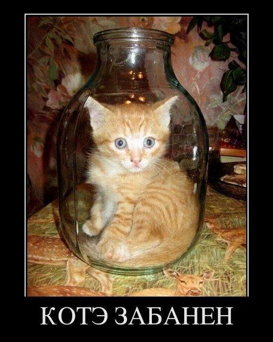 Фото коте с подписями