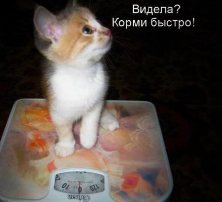 котенок на весах