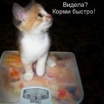 Котенок на весах - 0 кг.