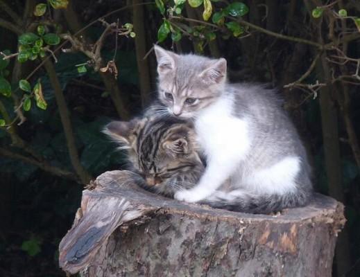 котята на пне