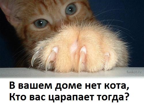 кошачья лапка царапка
