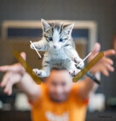 котенок лыжник