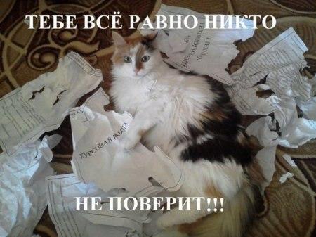 кошка порвала курсач