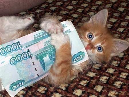 котенок при деньгах