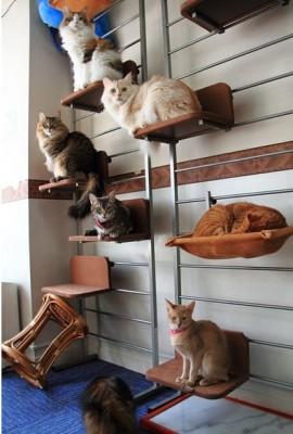 коты на полках