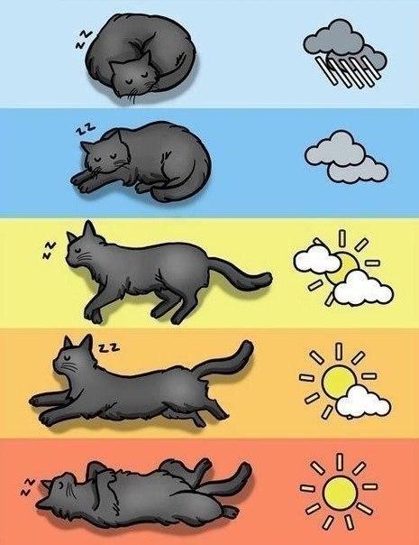 прогноз погоды по коту