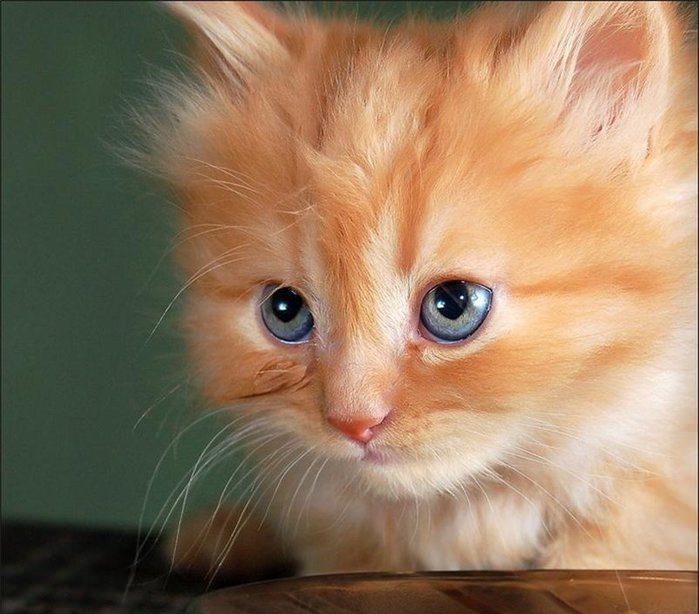 Коты с милыми глазками