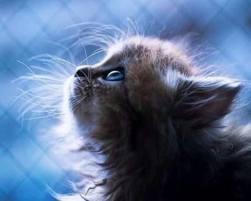 котенок в голубом свете