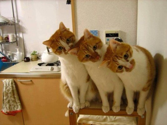 три рыжих кота