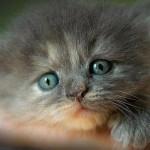 молящий взляд котенка