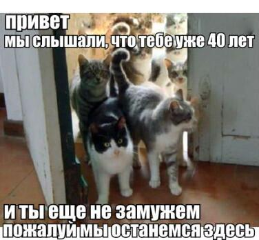 коты входят в дверь