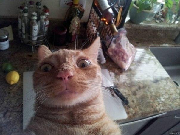 скачать игру кота на телефон - фото 3