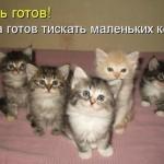 В общем котята смешно отрываются по