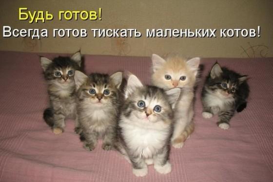 ты готов тискать маленьких котов?