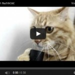 cat-loves-pylesos-screenshot