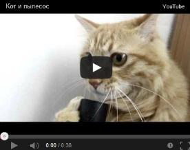 Видеокотека - смешные кошки видео